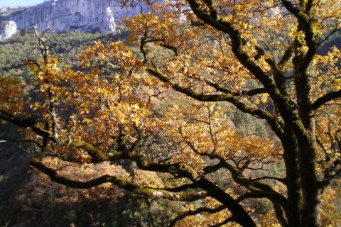 Herbstkräuter
