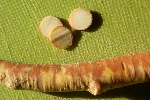 Meerrettich – Armoracia rusticana