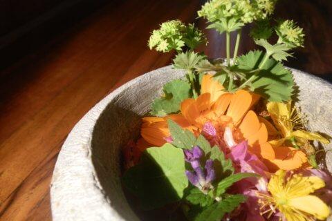 Kräuterapotheke – Heilpflanzen aus Garten, Wald und Wiese