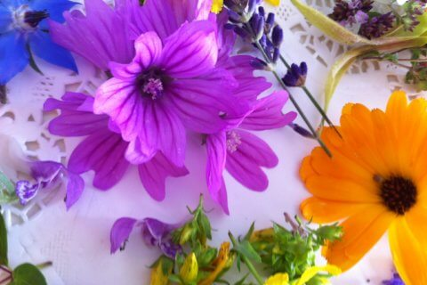 prächtige Vielfalt – die Blüten