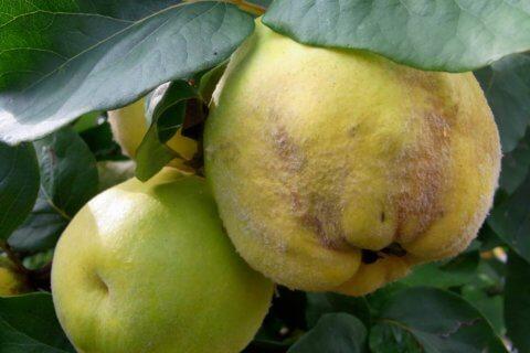 Erntezeit Herbst – Die Früchte